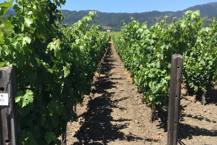Santa Barbara County Wineries