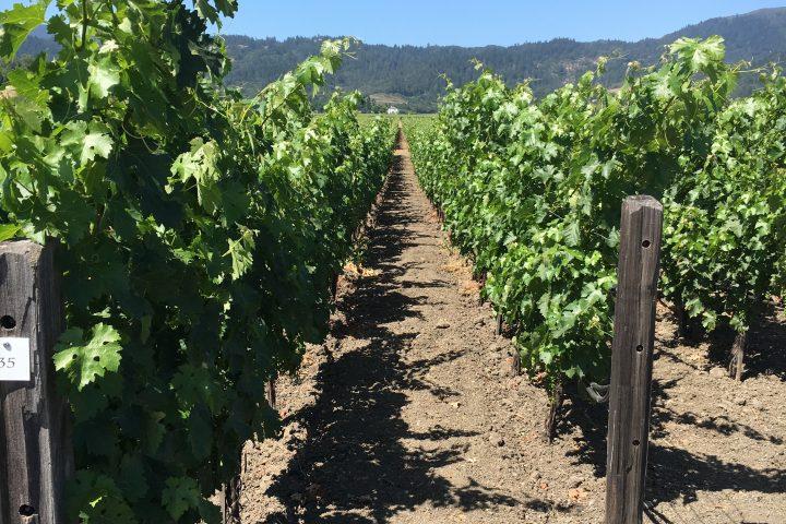 Santa Barbara County Wineries