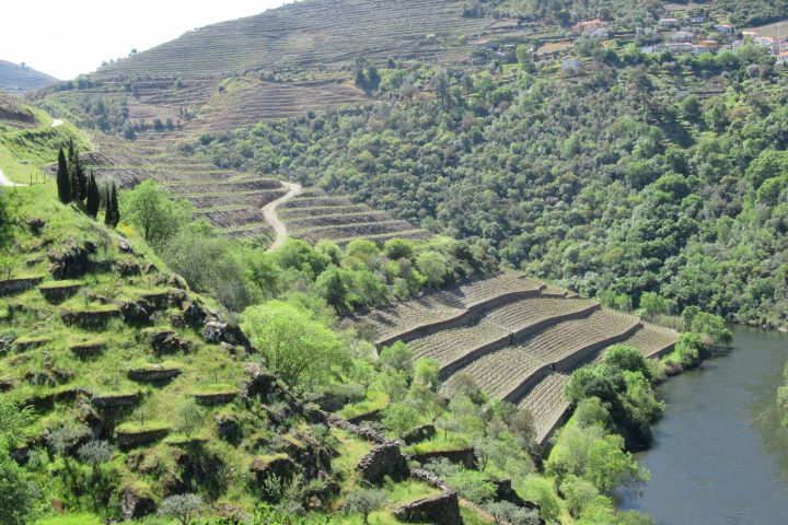 Douro Valley: Unusual beauty