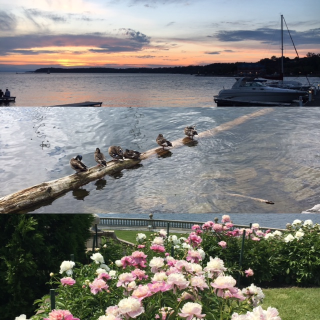Flowers at Shelburne farms, ducks in a row on Lake Champlain, sunset over Lake Champlain